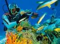 Best Locations of Snorkeling and Diving in Bali
