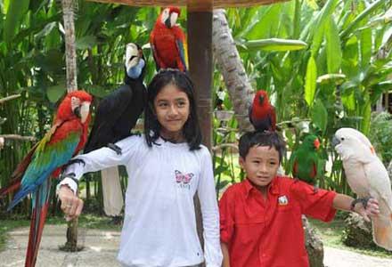 Bali Bird Park And Bali Reptile Park Bali Bali Beach