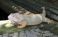 Bali Reptile Park