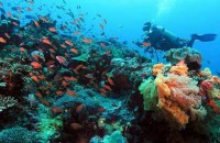 Diving at Penida Island