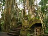 ubud-forest